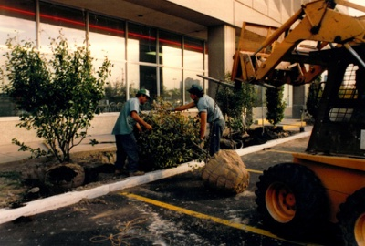 International Landscaping professionals planting shrubs outside of a commercial property.